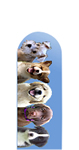 Glass Nail File: Puppies